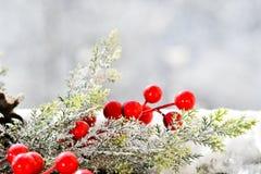 圣诞节槲寄生 免版税图库摄影