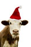圣诞节母牛 免版税库存图片