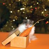 圣诞节求知欲礼品仓鼠s 免版税库存照片