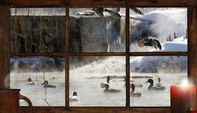圣诞节池塘。 免版税库存图片