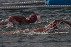 圣诞节港口游泳2015年,巴塞罗那,口岸Vell - 12月25日:在200米的游泳者种族距离 库存照片