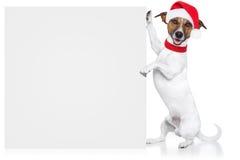 圣诞节狗占位符 免版税库存照片