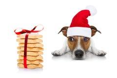 圣诞节狗和曲奇饼 库存图片