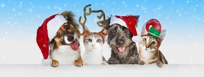 圣诞节狗和猫在白色网倒栽跳水 库存图片