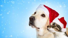 圣诞节狗和猫网站倒栽跳水 免版税库存照片
