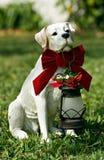 圣诞节狗圣诞老人 免版税库存照片