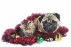 圣诞节狗小猫 免版税库存图片