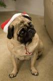 圣诞节狗帽子 免版税库存图片