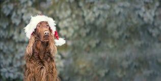 圣诞节狗横幅 免版税库存图片