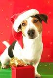 圣诞节狗滑稽的明信片 免版税库存图片