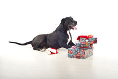圣诞节狗礼品 免版税库存照片