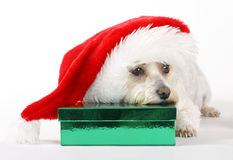 圣诞节狗s 库存图片