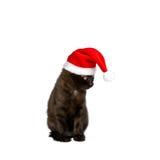 圣诞节猫盖帽幽默白色 免版税库存图片