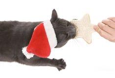 圣诞节猫-灰色猫圣诞老人,与圣诞老人h的圣诞节宠物 库存照片