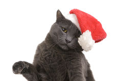 圣诞节猫-灰色猫圣诞老人,在圣诞老人帽子的圣诞节宠物 库存照片