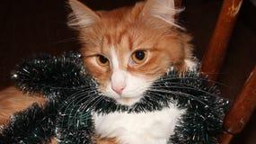 圣诞节猫 库存图片
