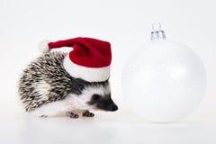 圣诞节猬 库存照片