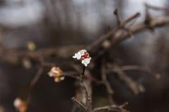 圣诞节现象-开花的花,布拉格,捷克 库存照片