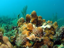 圣诞节珊瑚结构树蠕虫 库存照片