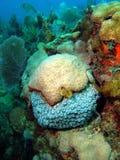圣诞节珊瑚结构树蠕虫 免版税库存照片