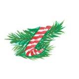 圣诞节用杉木装饰的棒棒糖 免版税库存图片