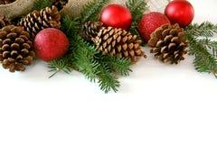 圣诞节电灯泡、在白色和常青树边界隔绝的杉木锥体 图库摄影