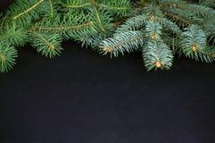 圣诞节的云杉的分支在黑暗的背景 库存照片