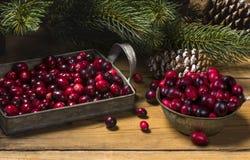 圣诞节的新鲜的有机蔓越桔 免版税库存图片