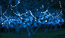 圣诞节的,新年,假日被弄脏的背景Bokeh 免版税图库摄影