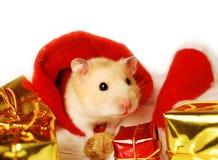圣诞节礼品仓鼠 免版税库存照片