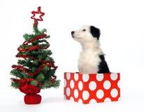 圣诞节礼品小狗 免版税库存照片