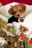 圣诞节礼品小狗 免版税库存图片