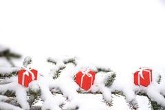 圣诞节礼物盒和雪杉树 免版税图库摄影