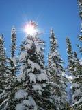 圣诞节科罗拉多结构树 免版税库存图片