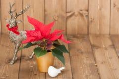 圣诞节符号 一品红花 驯鹿 免版税库存图片