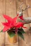 圣诞节符号 一品红花 驯鹿 免版税图库摄影