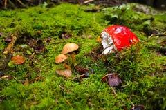 圣诞节精神在森林里 免版税图库摄影