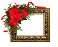 圣诞节红色一品红开花与丝带的壁角安排 图库摄影