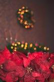 圣诞节红色一品红 免版税图库摄影