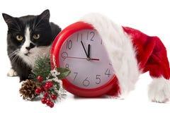 圣诞节红色时钟和一只猫在白色 库存图片