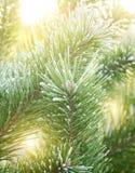 圣诞节绿色结构树 库存照片