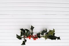 圣诞节绿色霍莉和红色莓果的摄影图象在阳光下在白色木背景 免版税库存图片