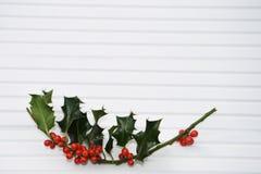 圣诞节绿色霍莉和红色莓果的摄影图象在阳光下在白色木背景 免版税库存照片
