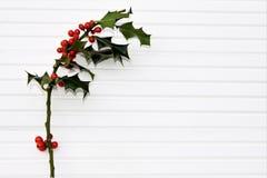 圣诞节绿色霍莉和红色莓果的摄影图象在阳光下在白色木背景 库存照片
