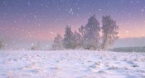 圣诞节自然 在降雪的镇静冬天风景 雪花在有冷淡的树的多雪的草甸落在黎明 库存图片