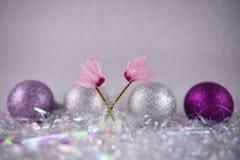 圣诞节花与英国仙客来桃红色瓣和闪烁树装饰中看不中用的物品的摄影图片在背景中 库存图片