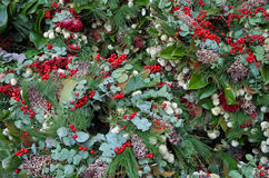 圣诞节花卉背景 库存图片
