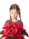圣诞节花 免版税库存照片