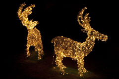 圣诞节被点燃的驯鹿 图库摄影