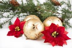 圣诞节装饰品,一品红,在白色的杉木 库存照片